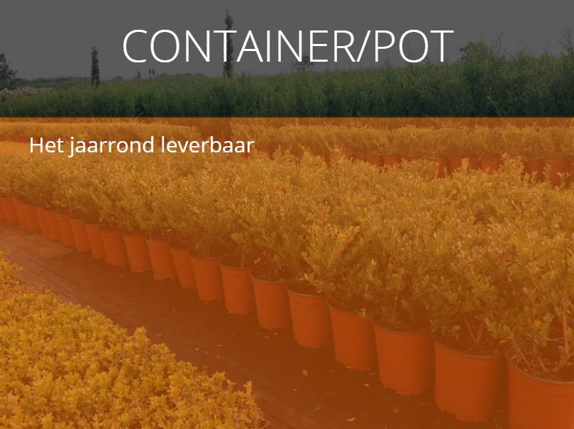 Container/pot